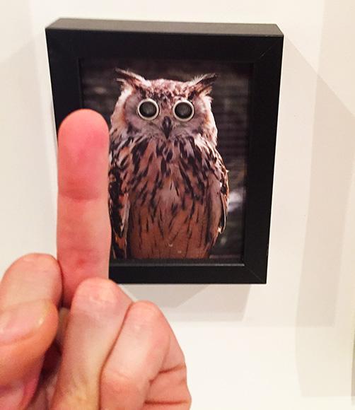 Surveillance owl