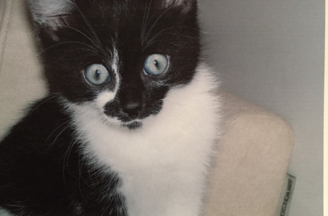 Frankie the kitten