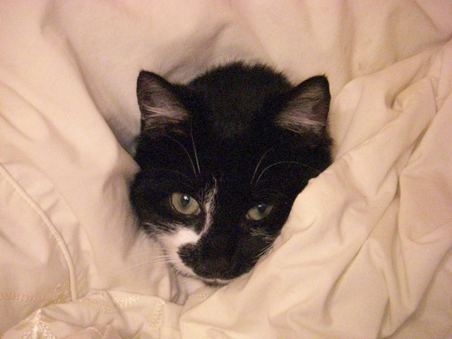 Tucked up in Bed